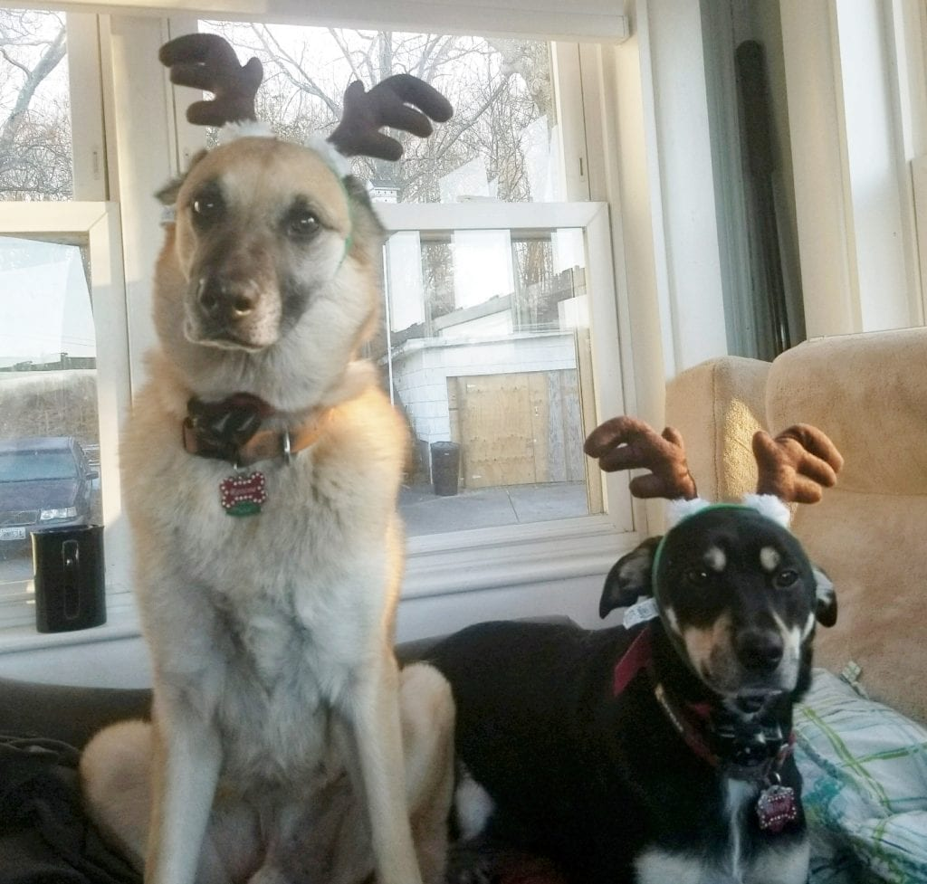 Roscoe and Riley Reindeer